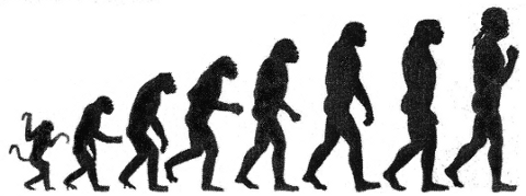 Bogus Picture of Evolution of Man
